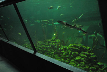 A section of the main aquarium at the North Sea Aquarium in Nr. Vorupør.