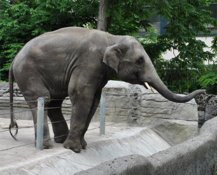 Hamburg Zoo - Germany - Europan Tourist Guide - euro-t-guide.com