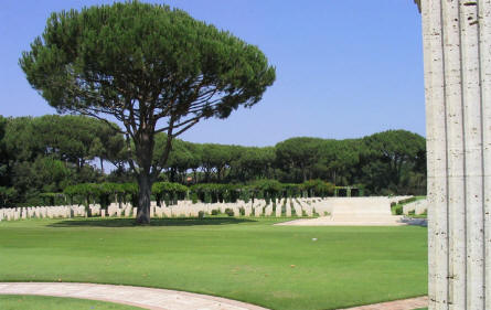 One of the beautiful trees at Anzio Beach Head War Cemetery.