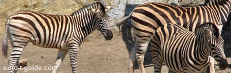 Selwo Adventura Zoo - Estepona - Spain - European Tourist Guide - euro-t-guide.com
